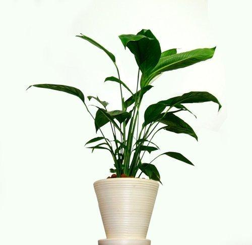 Inred med gröna växter för ett levande hem